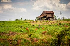 A traditional hut in the province of Preah Vihear, Cambodia.  (Photo by Actioncambodia)  http://www.asiakingtravels.com/tours/country/2/Cambodia-Tours.html