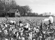 How would America have been affected if tobacco and Cotton were actually unproductive crops in the south?