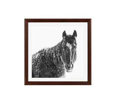 "Snowy Black Horse by Jennifer Meyers, 25 x 25"", Ridged Distressed, Espresso, Mat"