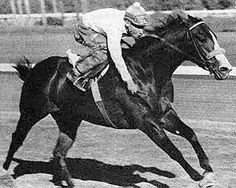 Goetta  Quarter Horse Triple Crown Winners, Horse Racing, Race Horses, Running Horses, Thoroughbred, Rodeo, Moose Art, History, Gallery