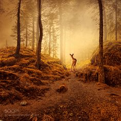 Last frontier of the forest by carasionut. @go4fotos
