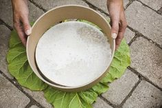 DIY stepping stones with rhubarb leaf. Leaf Stepping Stones, Path Edging, Camping Crafts, Do It Yourself Projects, Garden Paths, Fun Projects, Diy And Crafts, Outdoor Decor, How To Make