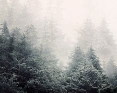 Forest in Fog, Landscape Photography by EyePoetryPhotography