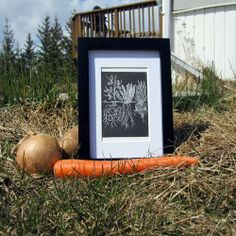 Garden Roots Black and White 3 x 4 Original by HaleyPolinsky, $10.00
