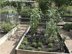 Collin County Master Gardeners website