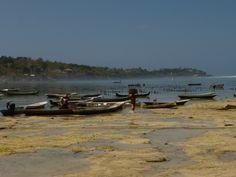 Bali, Nusa Lembongan. Seaweedfarms.