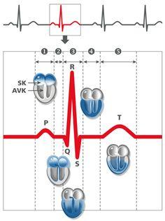 Anhaltende Herzrhythmusstörungen vom Arzt abklären lassen (Kardiologie, Aktuelles, 19.10.2009)