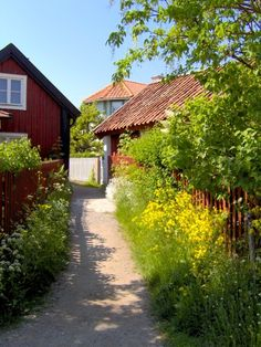 Summer, country path, Sweden