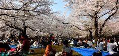 Un jour à Tokyo : Hanami & les prémices du printemps...