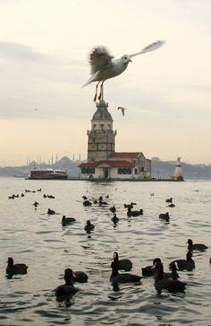 sanki martı yakalayıp götürüyormuş gibi...İstanbul,martıları,gemileri,kız kulesi,hiç biri bir birinden ayrılamaz....