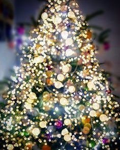 Cosy Winter, Christmas Tree, Holiday Decor, Home Decor, Teal Christmas Tree, Decoration Home, Room Decor, Xmas Trees, Christmas Trees