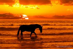 This person created a Photo Gallery for exceptional horse Silhouettes! I have pinned several but there are more that you have to see!