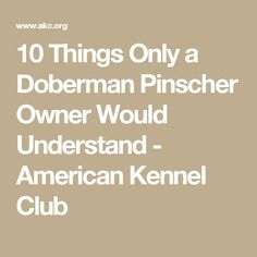 10 Things Only a Doberman Pinscher Owner Would Understand - American Kennel Club