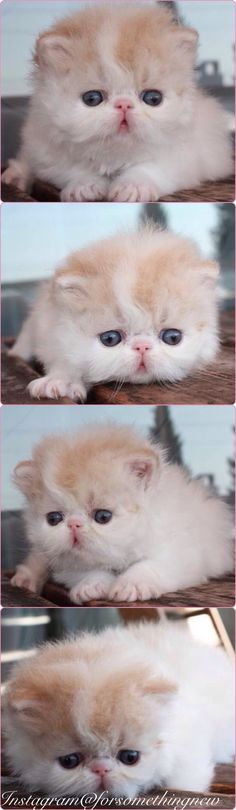 Kittens share cute things at www.sharecute.com