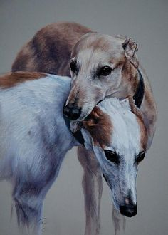 Greyhounds by Claire Verity Greyhound Art, Italian Greyhound, Lurcher, Grey Hound Dog, Fauna, Dog Portraits, Art Plastique, Animal Paintings, Beautiful Dogs