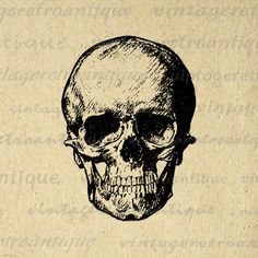 Digital Graphic Human Skull Image Printable Skull Illustration Download Antique Clip Art. High quality digital graphic. This high resolution printable digital image is great for making prints, transfers, pillows, t-shirts, papercrafts, and more great uses. Great for use on etsy items. This digital graphic is large and high quality, size 8½ x 11 inches. A Transparent background png version is included.
