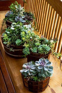 6 dicas para incrementar seu jardim