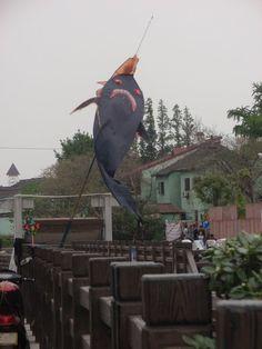 Scary shark kite!!!