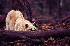 wolve | Tumblr