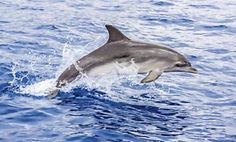 Up to 52% Off a 90-Minute Dolphin and Manatee Tour via Boat