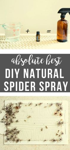Get rid of Spiders for good with this All Natural Spider Spray Homemade Cleaning Products, Natural Cleaning Products, Insect Repellent, Spider Repellant, Spider Spray, Spider Killer, Bug Spray Recipe, Get Rid Of Spiders, Mosquito Spray
