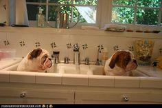 Bath time bullies