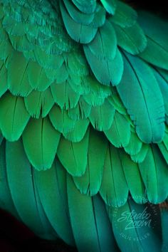Green Macaw Parrot Feathers Photography Print, Exotic Wildlife and Bird Art for. - Womens Fashion- Green Macaw Parrot Feathers Photography Print, Exotic Wildlife and Bird Art for… – Women's Fashion aesthetic - Rainbow Aesthetic, Aesthetic Colors, Aesthetic Green, Green Colors, Colours, Green Art, Parrot Feather, Feather Photography, Photo Wall Collage