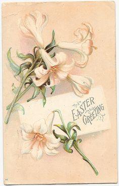 Easter Lillies ... sooo pretty!