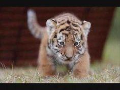 Animales Bebés -Baby Animals