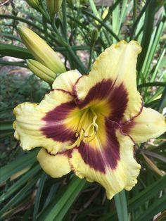 #Lilien, #Garten Plants, Lilies, Lawn And Garden, Plant, Planting, Planets