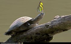 Slow down, butterfly.