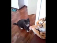 very cute cat want to fight a tiger...cute pets and animals...