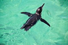 The Top 10 Adventures On a Galapagos Cruise