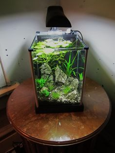 Andrew's 2nd tank - planted spec 2 tank - boraras maculatus & wild tigers arrived :D - Page 3