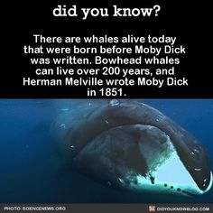 did you know? - There are whales alive today that were born before...