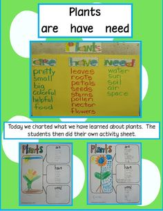 Kindergarten: Plants Unit Ideas.....if you already don't have enough