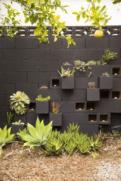 Constructing a Cinder Block Garden is one of the most truly effective methods to use a minimal quantity of space to elevate your own fresh vegetables. Cinder blocks are a good option if you plan a keyhole garden too. Cinder Block Walls, Cinder Block Garden, Cinder Blocks, Cinder Block Ideas, Backyard Fences, Backyard Landscaping, Backyard Ideas, Landscaping Ideas, Fence Garden
