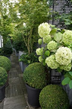 jardin paysager, jardin magnifique très vert