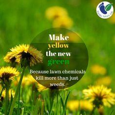 pesticide dangers