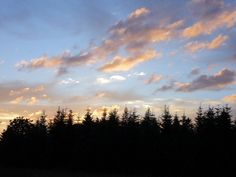 Tree skyline at sunset near Stayton Oregon