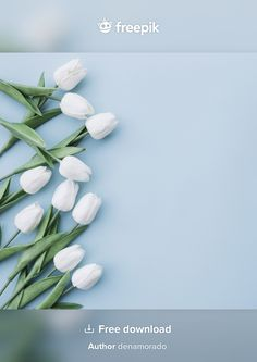 Download White Tulips On Pastel Blue Background With Space On The Right Side for free