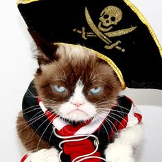 Q.How much do #cat pirates  charge to pierce someone's ears? A. A buck an ear.