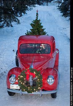 bringing home the tree! Caption: Man driving a vintage 1941 Ford pickup with a Christmas wreath on the grill and a tree in the back during Winter in Southcentral, Alaska. Photographer: Jim Lavrakas.
