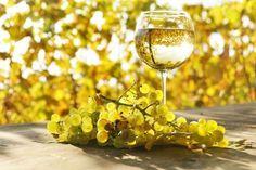 В результате многих исторических фактов и научных исследований, анализа грузинской традиционной песни и песнопения установлено, что в процессеухода за виноми виноградом музыке в Грузии уделялось особое...