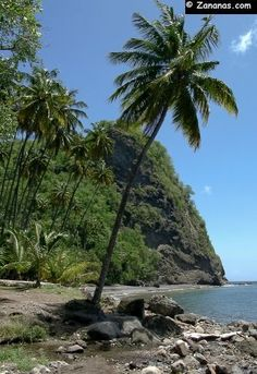 La plage de l'Anse Couleuvre au nord de la Martinique. Une très jolie plage de sable noir volcanique.