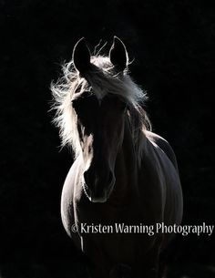 The Equine Photographers Network is an Internet resource for locating an equine photographer in your area. Black Canvas Paintings, Horse Fashion, Portfolio Images, Equestrian, Fashion Photography, Horses, Gallery, Animals, Animales