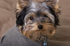 photoshoot with his new hoodie | Flickr: Intercambio de fotos