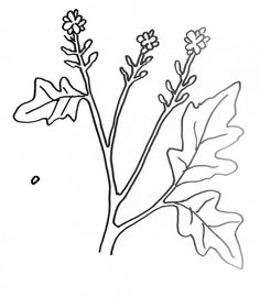 Coloring Page For Parable Mustard Seed