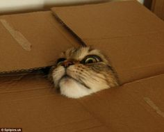 How did it get in there in the first place? This cat found itself stuck after squeezing th...