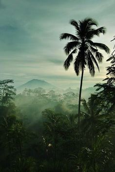 The natural beauty of Bali. I want to see the whole world
